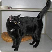Adopt A Pet :: Zandor - Ruidoso, NM