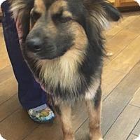 Adopt A Pet :: Bert - Mount Holly, NJ