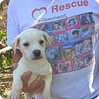 Adopt A Pet :: Lucky - Orlando, FL