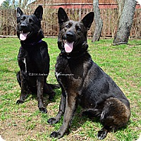 Adopt A Pet :: Kane and Avia - Indianapolis, IN