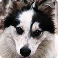 Adopt A Pet :: Fiona - Kingwood, TX