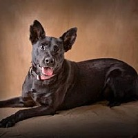 Adopt A Pet :: GIZELLE - Little Rock, AR