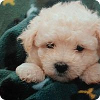 Adopt A Pet :: Kimmie - Stamford, CT