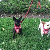 Adopt A Pet :: Simon - Santa Ana, CA