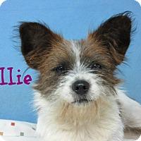Adopt A Pet :: Ellie - Brazil, IN