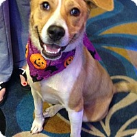 Adopt A Pet :: Dollie - Natchitoches, LA