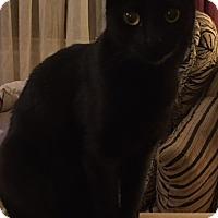 Adopt A Pet :: GiGi - Covington, KY