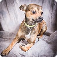 Adopt A Pet :: FLOKI - Anna, IL
