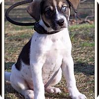 Adopt A Pet :: Wrangler - Milford, NJ