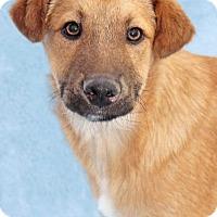 Adopt A Pet :: Johnny Jump Up - Encinitas, CA