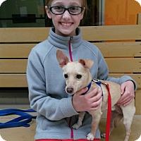 Adopt A Pet :: Luke - Elyria, OH
