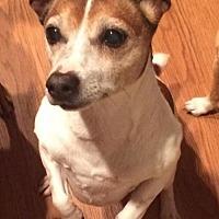 Adopt A Pet :: Lillie - Corbin, KY