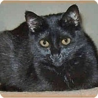 Adopt A Pet :: Boo - Howell, MI