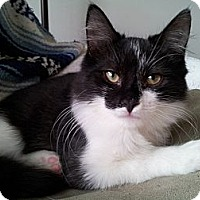 Adopt A Pet :: O'Mally (KL) - Little Falls, NJ
