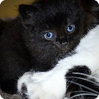 Adopt A Pet :: Theo - Xenia, OH