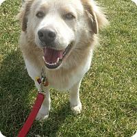 Adopt A Pet :: Baron - Manchester, NH