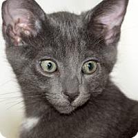 Adopt A Pet :: Yoda - Pasadena, CA