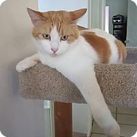 Adopt A Pet :: Brozi (aka Brozita) - San Diego, CA