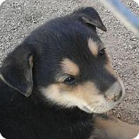 Adopt A Pet :: Kitty's Kiki - Las Vegas, NV