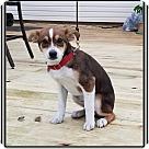 Adopt A Pet :: Mopar