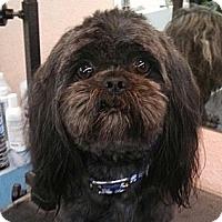 Adopt A Pet :: Levi - Seattle, WA