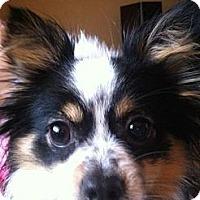 Adopt A Pet :: Gracie - Puyallup, WA