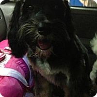 Adopt A Pet :: Catalina - Oceanside, CA