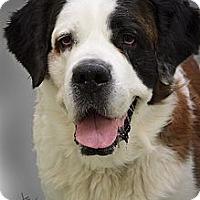 Adopt A Pet :: Ralph - Dandridge, TN