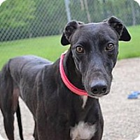Adopt A Pet :: Ellie (DK's Backround) - Chagrin Falls, OH