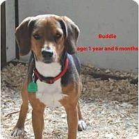 Adopt A Pet :: Buddie - Eden, NC