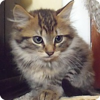 Adopt A Pet :: Annie & Darla - Arlington, VA