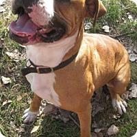 Adopt A Pet :: Filmore - Gary, IN