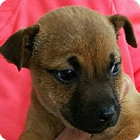 Adopt A Pet :: Evan - Gainesville, FL