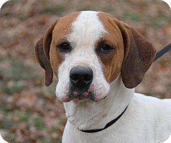 Hound (Unknown Type) Mix Dog for adoption in Marietta, Ohio - Tyson (Neutered)