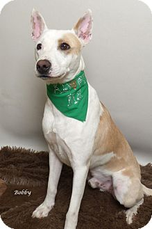 Terrier (Unknown Type, Medium) Mix Dog for adoption in Kerrville, Texas - Bobby