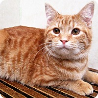 Adopt A Pet :: ADOPTED!!!   Jacob - Downers Grove, IL