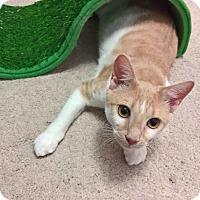 Adopt A Pet :: JEM - Raleigh, NC