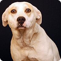 Adopt A Pet :: Rogue - Newland, NC