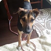 Adopt A Pet :: Finnegan - West Hartford, CT