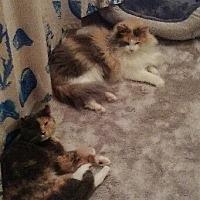 Adopt A Pet :: Butter and Scotch - Livonia, MI