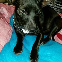 Adopt A Pet :: LB - Cerritos, CA