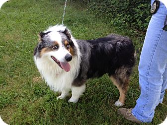 Collie Mix Dog for adoption in LaGrange, Kentucky - MURPHY