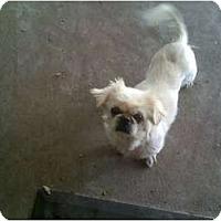 Adopt A Pet :: Lucy Lu - Orlando, FL