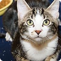 Adopt A Pet :: Belle - Irvine, CA