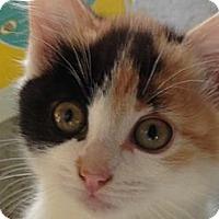 Adopt A Pet :: Ladybug - College Station, TX
