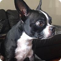 Adopt A Pet :: Fitzie - Temecula, CA