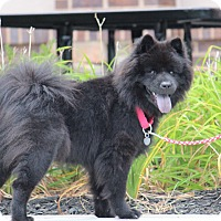 Adopt A Pet :: Summer - Tucker, GA