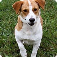 Adopt A Pet :: Suzy - Sylvania, GA