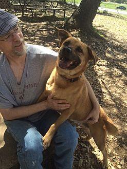 Golden Retriever/Shepherd (Unknown Type) Mix Dog for adoption in Fair Oaks Ranch, Texas - Olivia