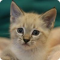 Adopt A Pet :: Kingsley - Canoga Park, CA
